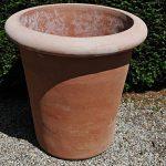 Terracotta pot vaso camelia bordo liscio