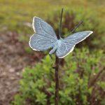 vlinder brons op steel